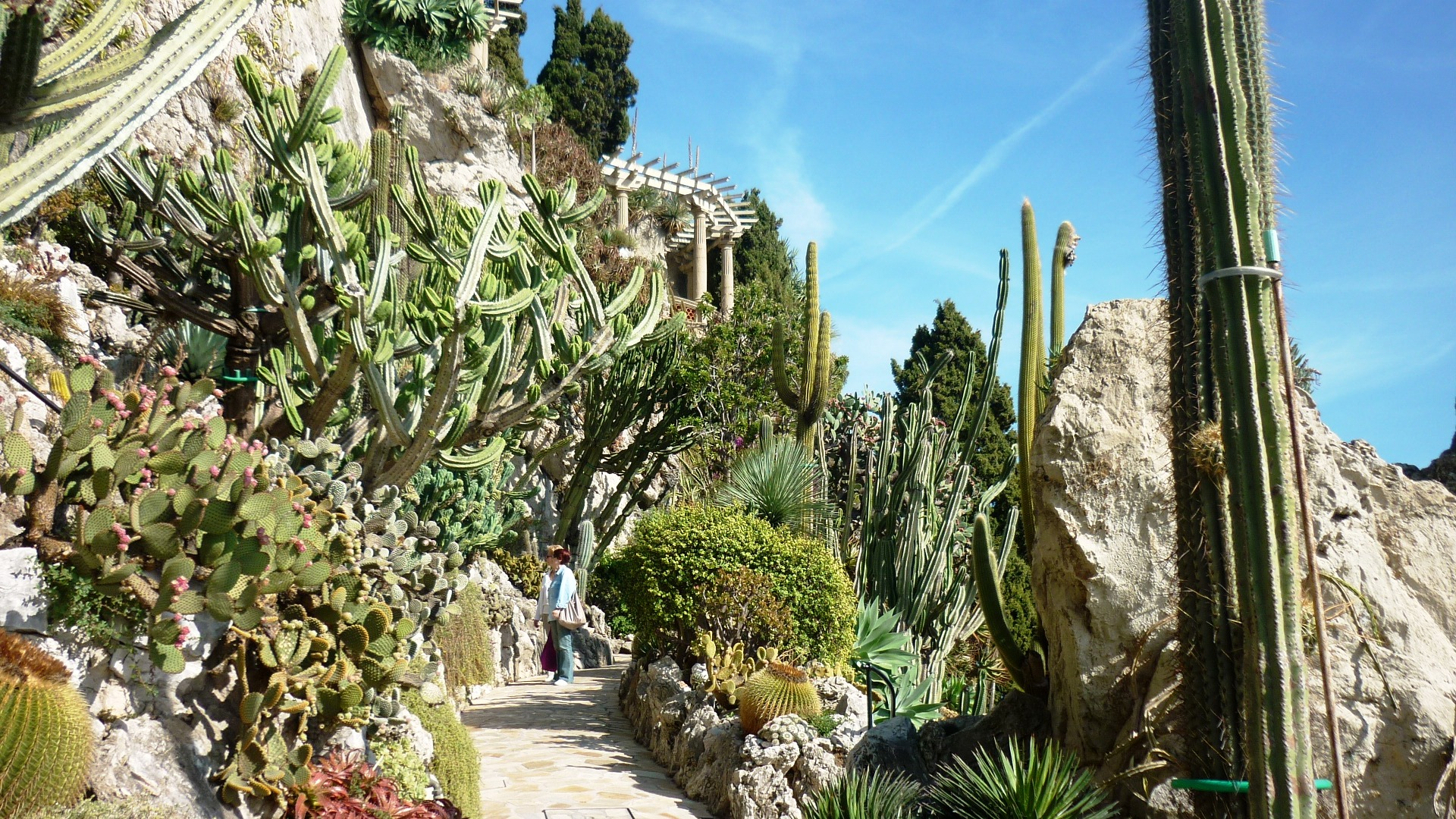 Monaco s exotic garden and the villa paloma museum the for Jardin exotique