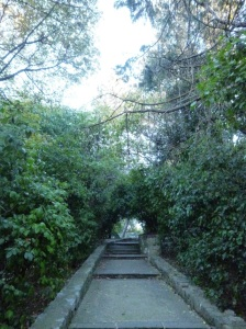 One of the beautiful footpaths winding their way up the Castle Hill