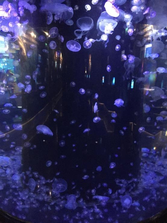 Jellyfish city (C) K. Hin
