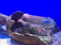 Cuttlefish (C) K. Hin