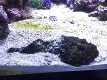The notorious stonefish (C) K. Hin