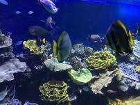 The tropical reef (C) K. Hin