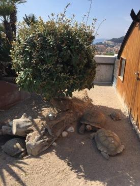 African tortoises sunbathing (C) K. Hin